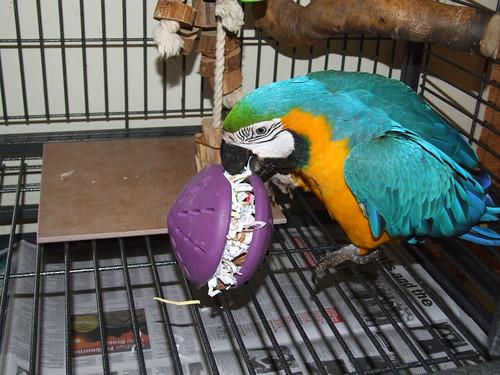 Fid - my Blue & Gold Macaw