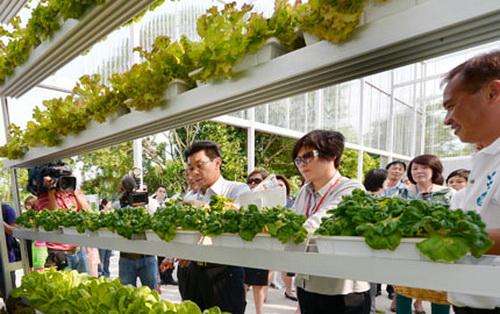 Первая вертикальная ферма A-Go-Gro появилась в Сингапуре