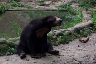 melaka zoo, malacca