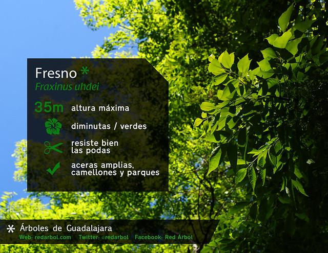 Rboles de guadalajara fresno flickr photo sharing for Arboles que dan sombra para jardin