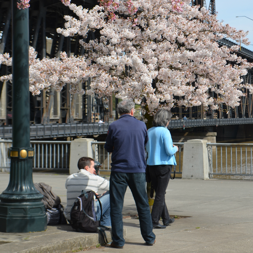 tom_mccall_people_steel_bridge_flowering_tree