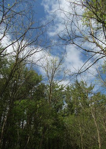 1660 trees sky