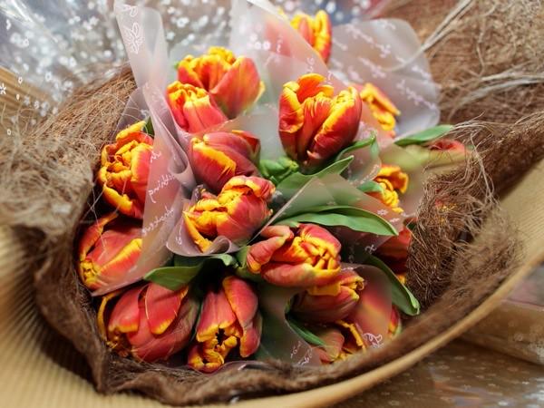 Tulips 2011_058