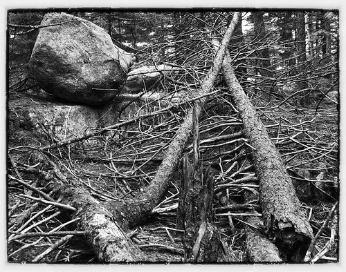 Crossed deadfalls with boulder (B&W)