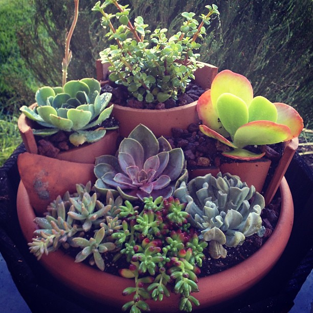 Photo - How to make a succulent container garden ...