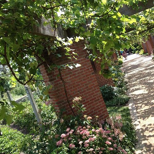 Vine garden sprawling