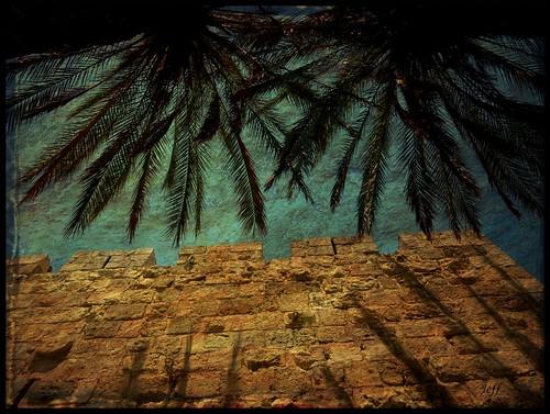 shadow sky texture silhouette stone wall jerusalem palm