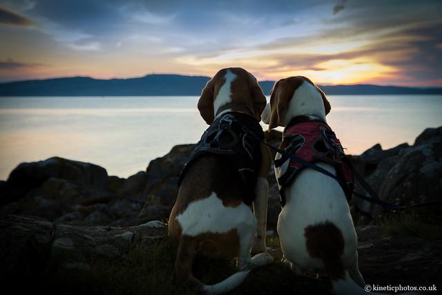 Beagle Sunset [IMG_4734-Edit]