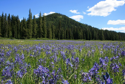 packer_meadows_20120630_041