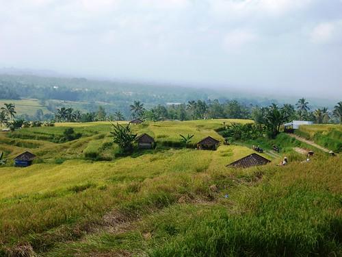 Bali-Route Legian-Jatiluwih (70)