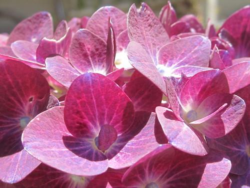 Sunlit Floral