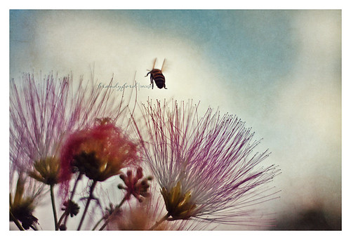 Flight of the Bumblebee by bford13