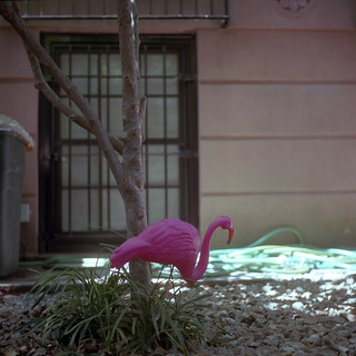 flamingo | boerum hill