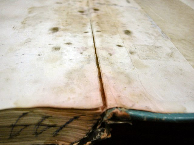 Textbook Damage - Mold