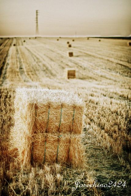 Despues de la cosecha
