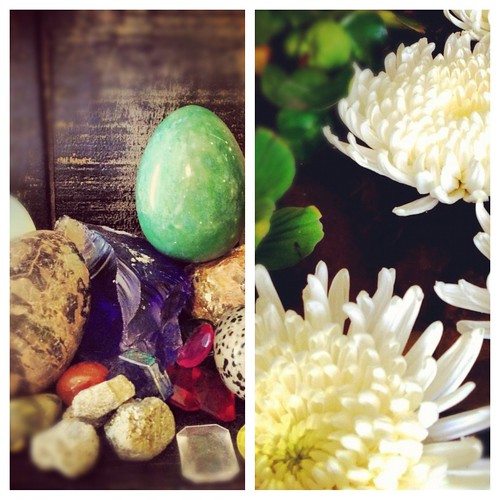 Rock Collections and beautiful lillies were spotted this week