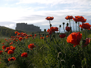 Poppies With Castle