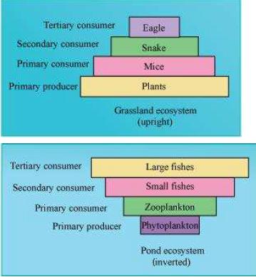 NCERT Solutions Class 12 Biology Chapter 14 Ecosystem