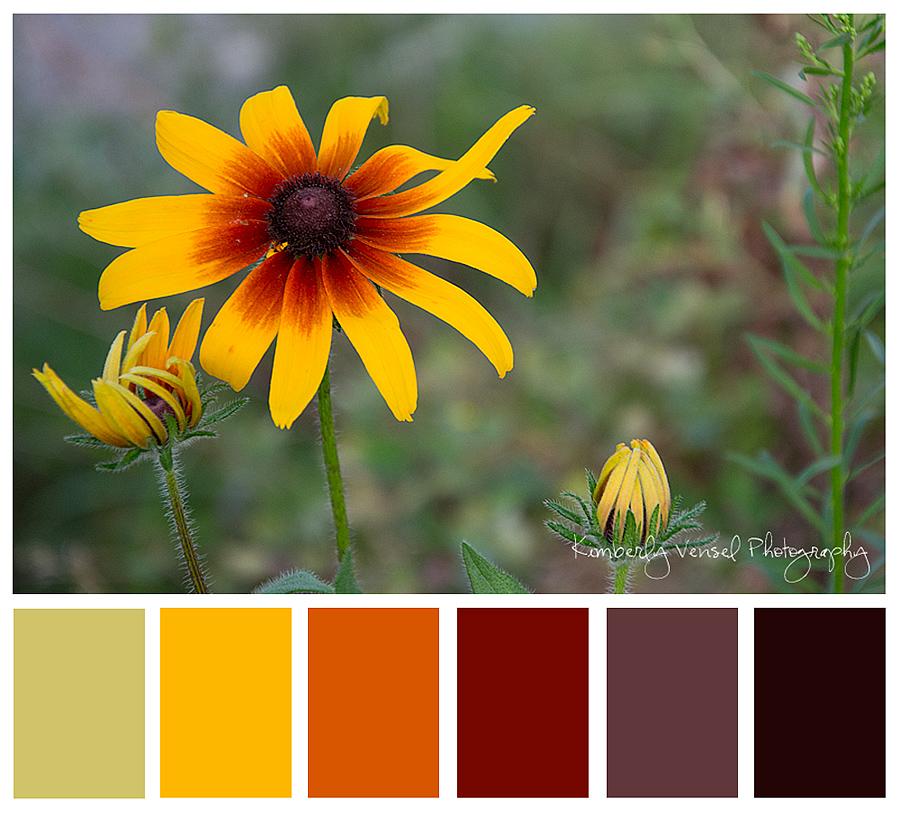 DSC_0038-colorbar