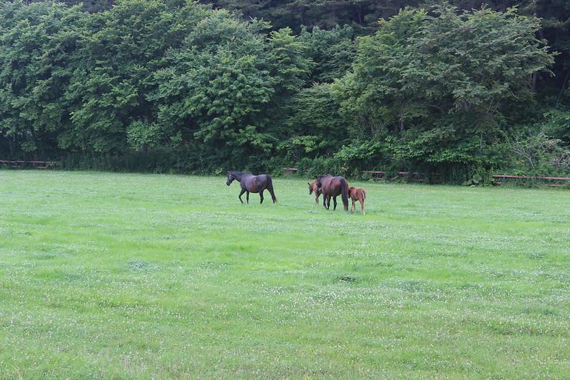 新冠へ向かう途中の馬