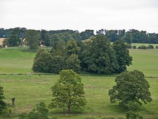Trees (ii)