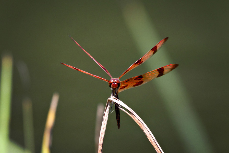 072612_04_zbug_dragonfly04