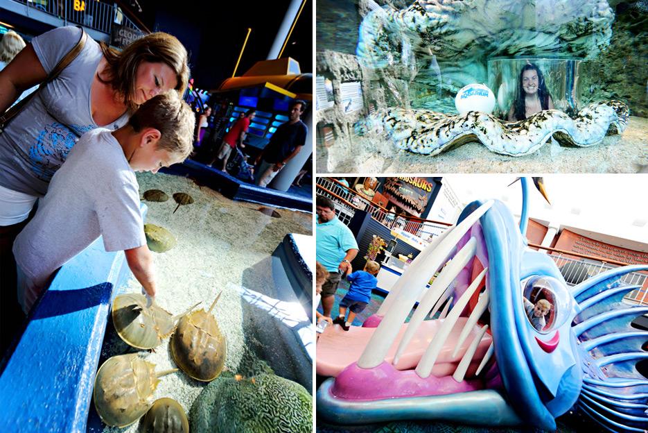 072612_10_aquarium08