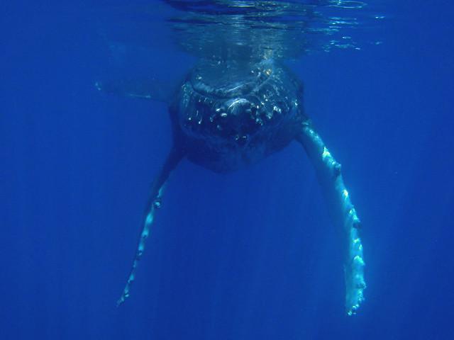 Dolphin Watch Tours Hilton Head Island