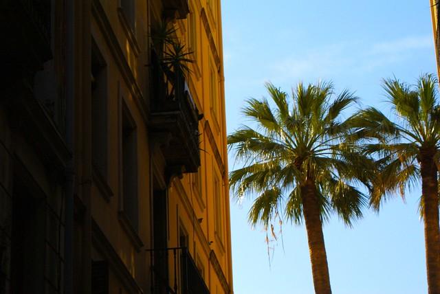 Palmier au bord de la mer à Barcelone.