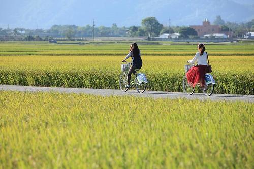台東縣池上鄉伯朗大道周邊景點吃喝玩樂懶人包 (3)
