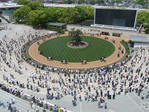 京都競馬場の6階から見下ろしたパドック