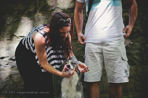 Loved. Artex and his parents. twoguineapigs pet photography, border collie, dog portraiture. A story about Artex. Getting ready for test shot.