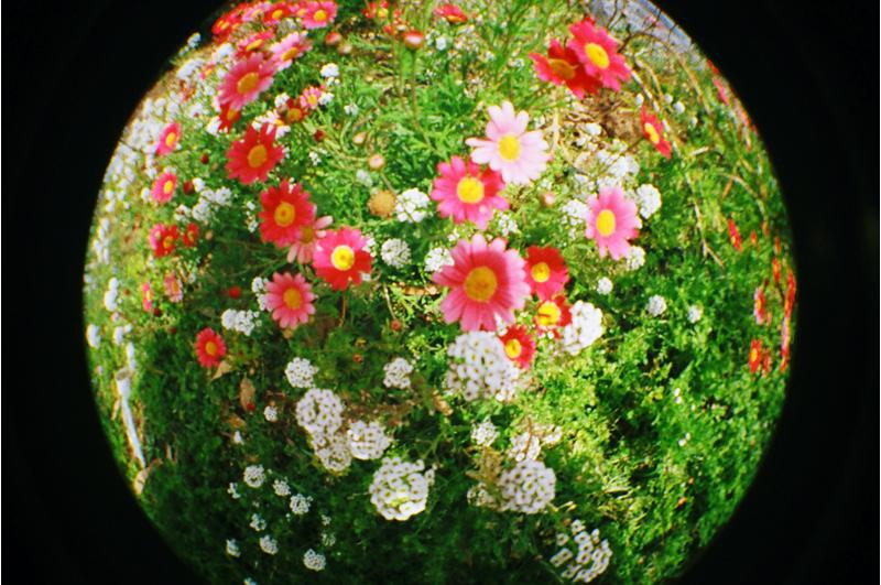 {spring} color