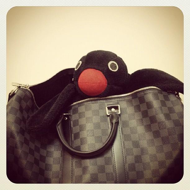 Pingu 喜歡他的新包包