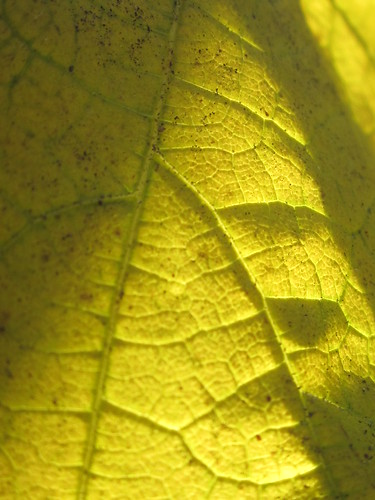 Yellow Leaf in Shadow