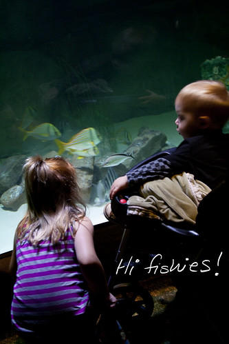 Sea Life Fish tank
