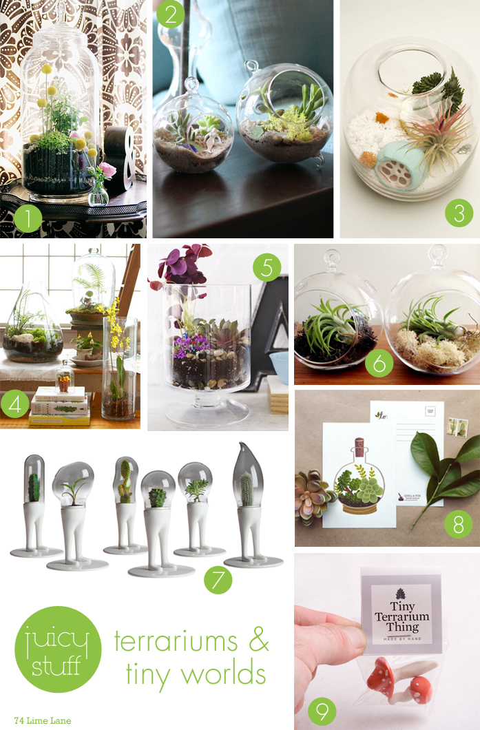 {juicy stuff} terrariums and tiny worlds