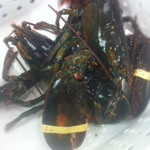 The Lobster Series (Part 1): How to Buy Fresh Lobster