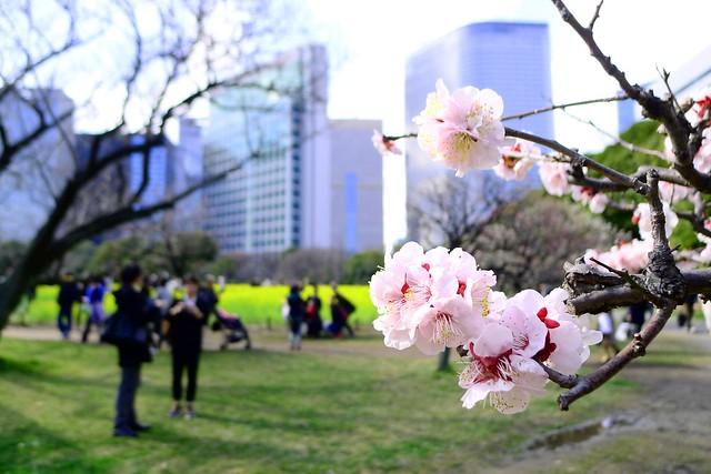 春来たるらし ~ Arrive of Spring