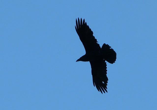 26901 - Raven, Rhossili