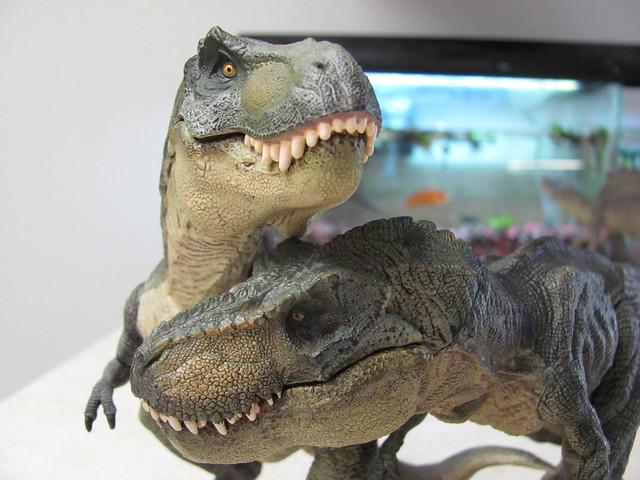 T-rex pair 01
