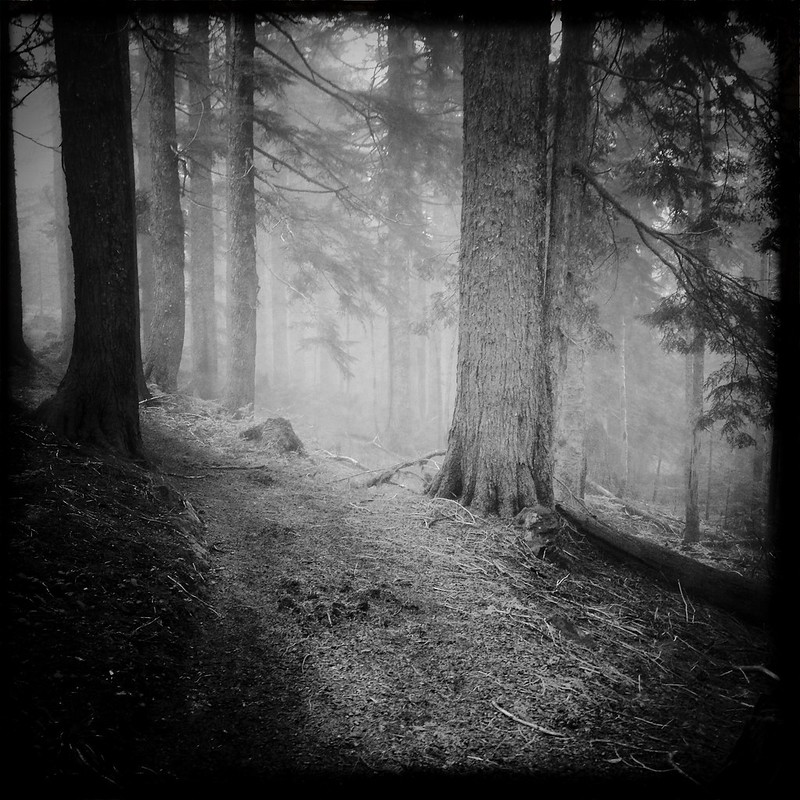 I took my Yashica and some Tri-x up to Larch Mountain today to capture the fog.