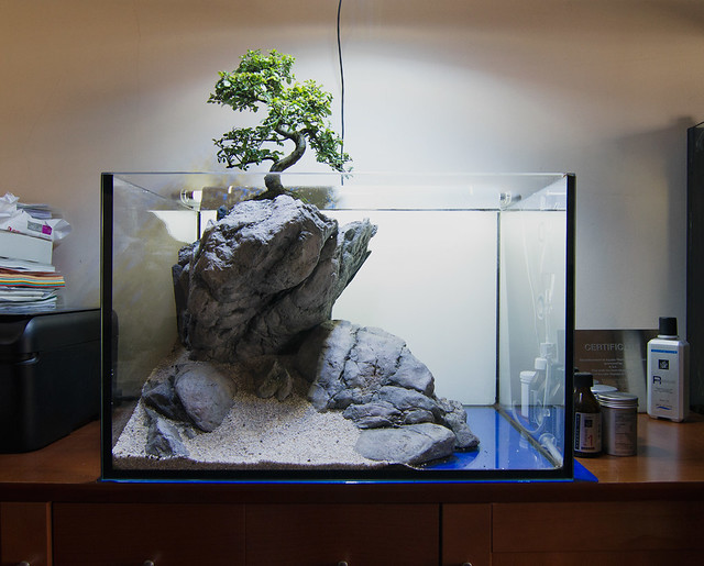 Faao Aquascaping Use Your Imagination 60l New Layout