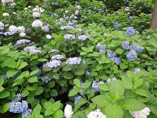 Photo 4 - 2012-07-08