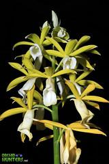 flower, yellow, laelia, flora, plant stem,