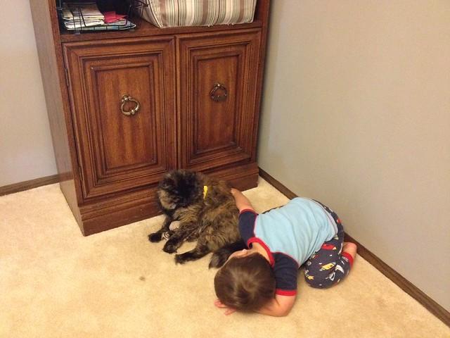 188 cat whisperer