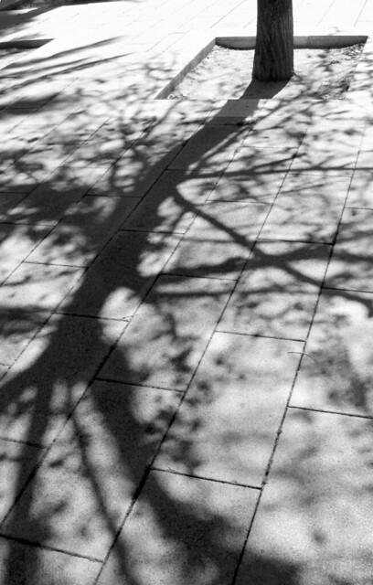 árbol sombra