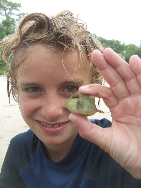 Jack with a tiny trunkfish!