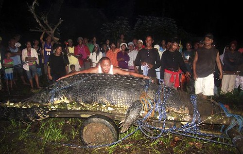 giant-saltwater-crocodile-found-philippines-night_39955_600x450
