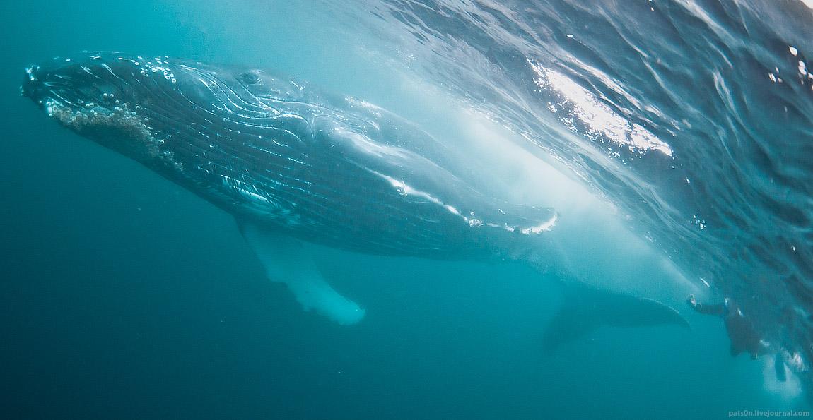 the sardine run 2012 #6